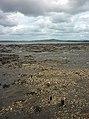 Mud and shells - geograph.org.uk - 2429661.jpg