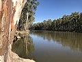 Murray River at Barmah National Park, Victoria.jpg