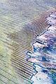 Mysterious cuts (19629020444).jpg