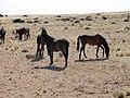 NA-garub-horses-3.jpg
