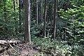 NPR Boubínský prales 20120910 05.jpg