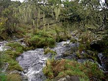 Naremoru river in the rainforest near Mt Kilimanjaro.JPG
