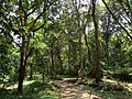 Narikadavu forest 1.jpg