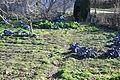 Narrillos del Rebollar-coles y lombardas.jpg