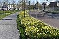 Nassausingel Breda P1360708.jpg