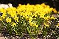 National Botanic Gardens, Dublin (6872745128).jpg