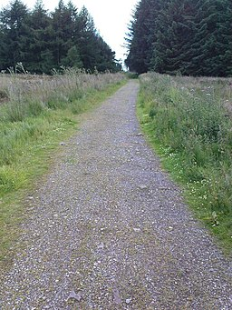 National Cycle Network Track into Silton Forest - geograph.org.uk - 891663