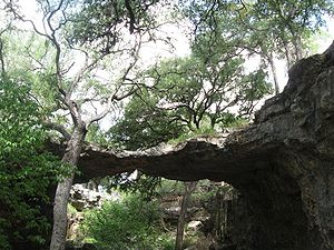 Natural Bridge Cavern near San Antonio Texas. ...