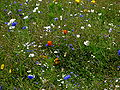 Natural flowers.jpg