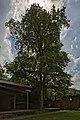 Naturdenkmal Zwei Alte Linden, Kennung 82350800009, Schloßruine, Wildberg 06.jpg