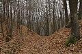 Nature reserve Šance in autumn 2012 (41).JPG