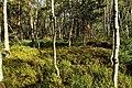 Nature reserve Rájecká rašeliniště in summer 2014 (7).JPG