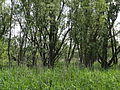Naturschutzgebiet Heuckenlock 21.05.2014 Phase 57.JPG