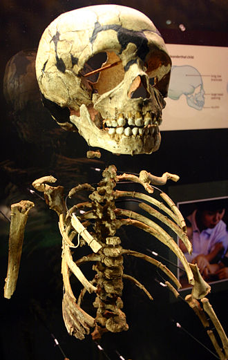 Neanderthal anatomy - Neanderthal child