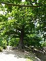 Neuer Wildenstein - Nationalpark Sächsische Schweiz 09.JPG