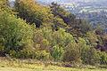 Nice colourful trees (1464520564).jpg