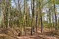 Niedersachsen, Heeßel, Landschaftsschutzgebiet NIK 2718.JPG