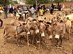 Niger, Boubon (11), weekly cattle market, donkeys.jpg