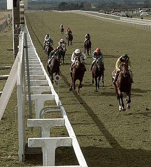 Nijinsky (horse) - Image: Nijinsky