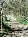North Downs Way from Brabourne Lane - geograph.org.uk - 392048.jpg