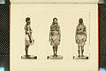 Nova Guinea - Vol 3 - Plate 48.jpg