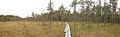 Nyrölä nature trail panorama.jpg
