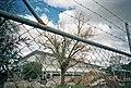 OASIS Wagga 2003.jpg