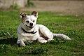 O cão que ri (2271653031).jpg
