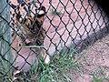Oaklawn Farm Zoo, May 16 2009 (3539731556).jpg