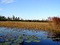 Okefenokee Swamp - Prairie - panoramio.jpg