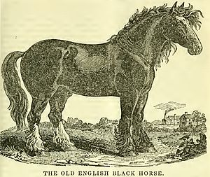 Old English Black - Engraving of the breed type