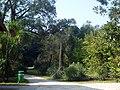 Orto Botanico di Roma - panoramio (6).jpg