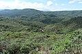 Ouro Preto - State of Minas Gerais, Brazil - panoramio (78).jpg