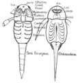 PSM V82 D427 Sea scorpion and an ostracoderm.png