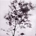 Paolo Monti - Serie fotografica (Italia, 1964) - BEIC 6361622.jpg