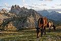 Parco Naturale Tre Cime horses 2.jpg