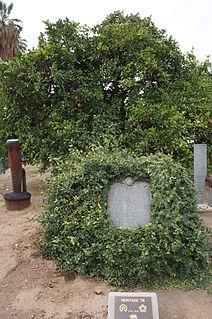 Washington navel orange tree (Riverside, California) Historic landmark in California