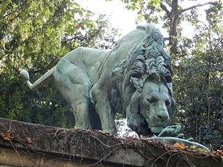 Lion reniflant un cadavre