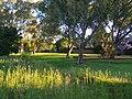 Parkland beside creek - panoramio.jpg