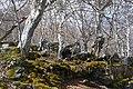 Parque Natural - panoramio.jpg