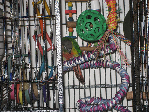 Parrot in cage with toys and ropes