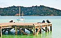 Parua Bay wharf, Northland, New Zealand, 4th. Dec. 2010 - Flickr - PhillipC.jpg