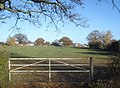 Pasture at Deblin's Green - geograph.org.uk - 623146.jpg