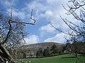 Pasture near Mathon Lodge - geograph.org.uk - 466614.jpg