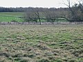 Pastures and woodland near Kirkharle (3) - geograph.org.uk - 626843.jpg
