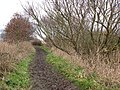 Path along the northeastern edge of Horsey Mere - geograph.org.uk - 1103363.jpg