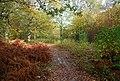 Path through Fore Wood - geograph.org.uk - 1577192.jpg
