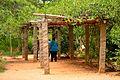 Pathway of Auroville Botanical Gardens.jpg