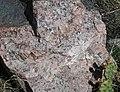 Pegmatitic granite dike in Black Canyon Schist (Proterozoic; No Thoroughfare Canyon, Colorado National Monument, Colorado, USA) 2 (23856363151).jpg