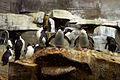 PenguinsShedd.jpg